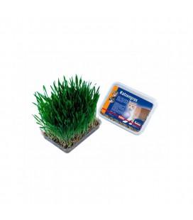 GRASS CAT 100gr