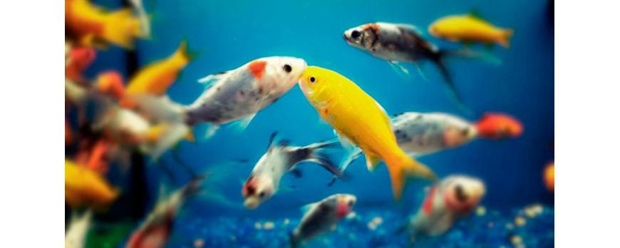 Iniciación en la acuariofilia